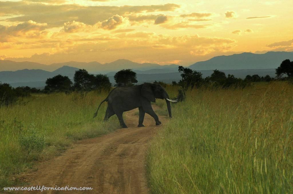 African safari experience - elephants