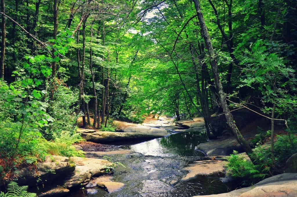 The murmuring stream