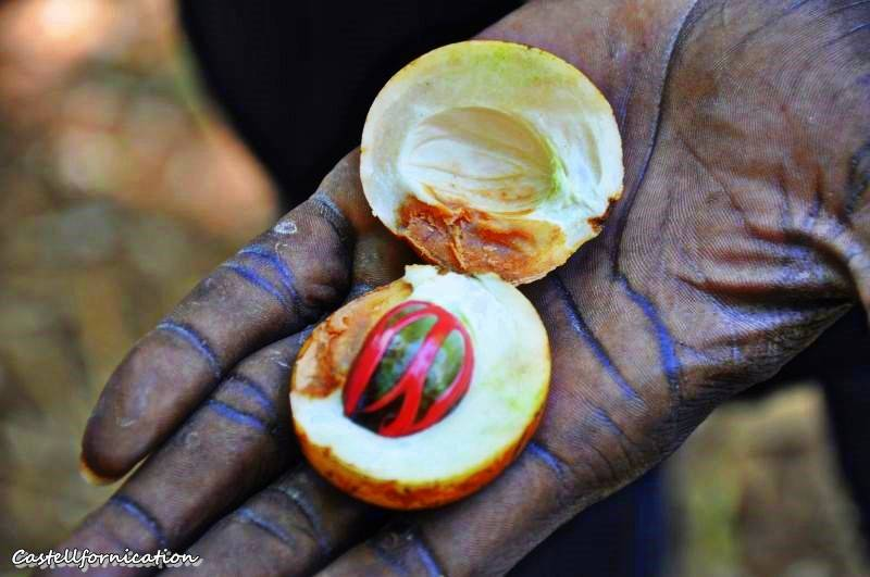 Zanzibar spice tour - zanzibar nutmeg