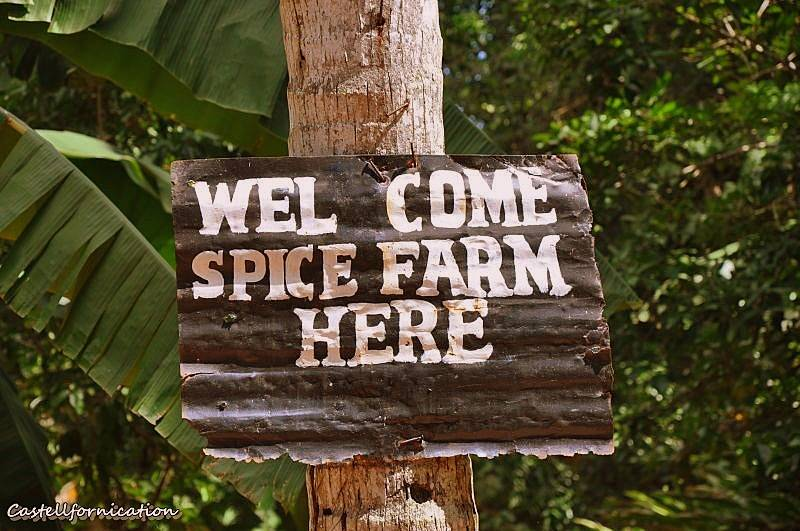 Zanzibar spice tour - zanzibar spice farm