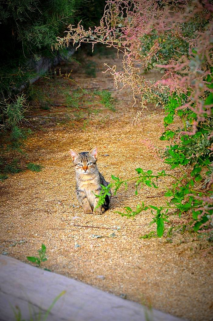 garraf -Hey kitty kitty